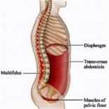 muscles-stabilisateurs-au-tronc